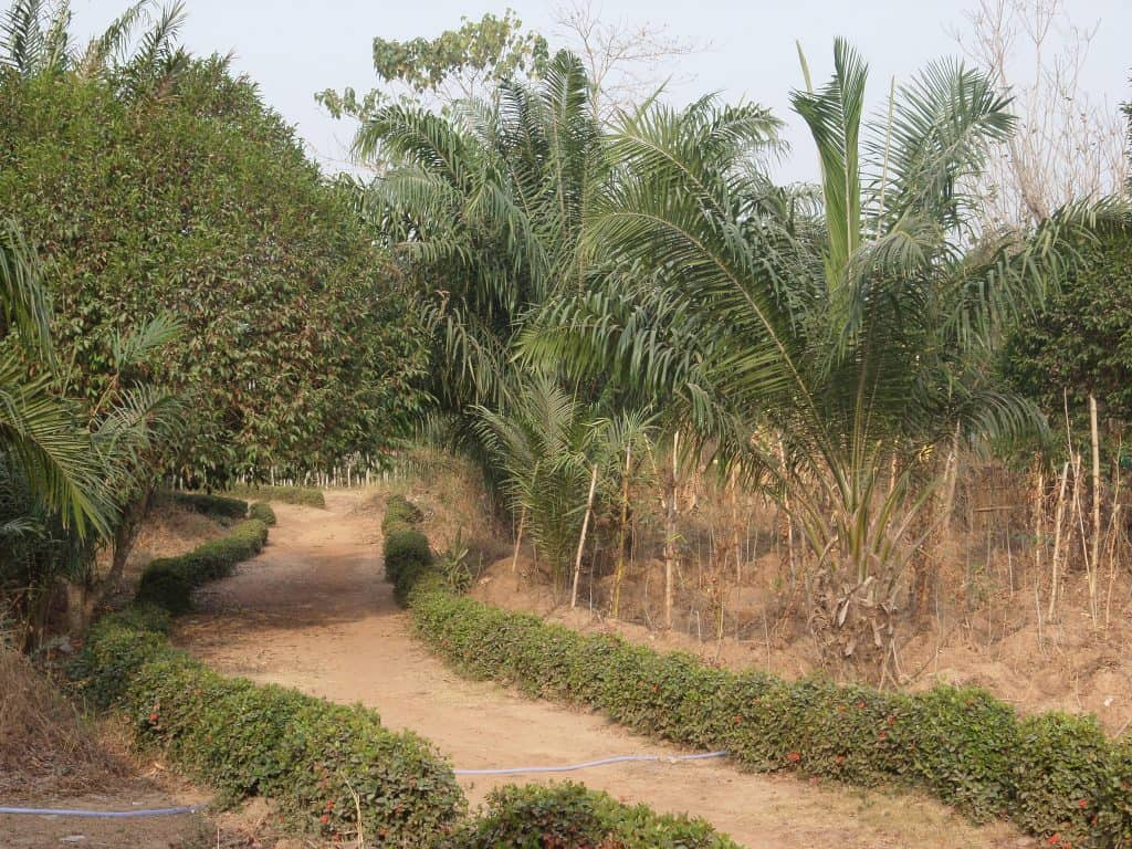 Dans les environs d'Abakaliki